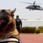 La unidad canina de la Policía Federal celebra 30 años de servicio