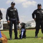 Realiza la SSPC la cuarta ceremonia de jubilación de oficiales caninos de la Policía Federal