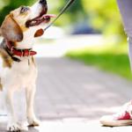Seguridad para tu perro