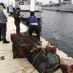 Autoridades Federales continúan realizando recorridos de inspección durante veda de langosta roja en Rincón Ballenas, Ensenada, B.C.